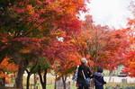 20111105花の都公園4.jpg